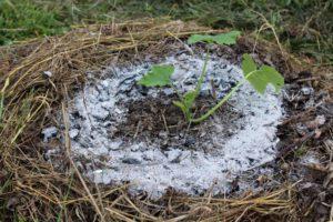 cendres barrière anti limaces