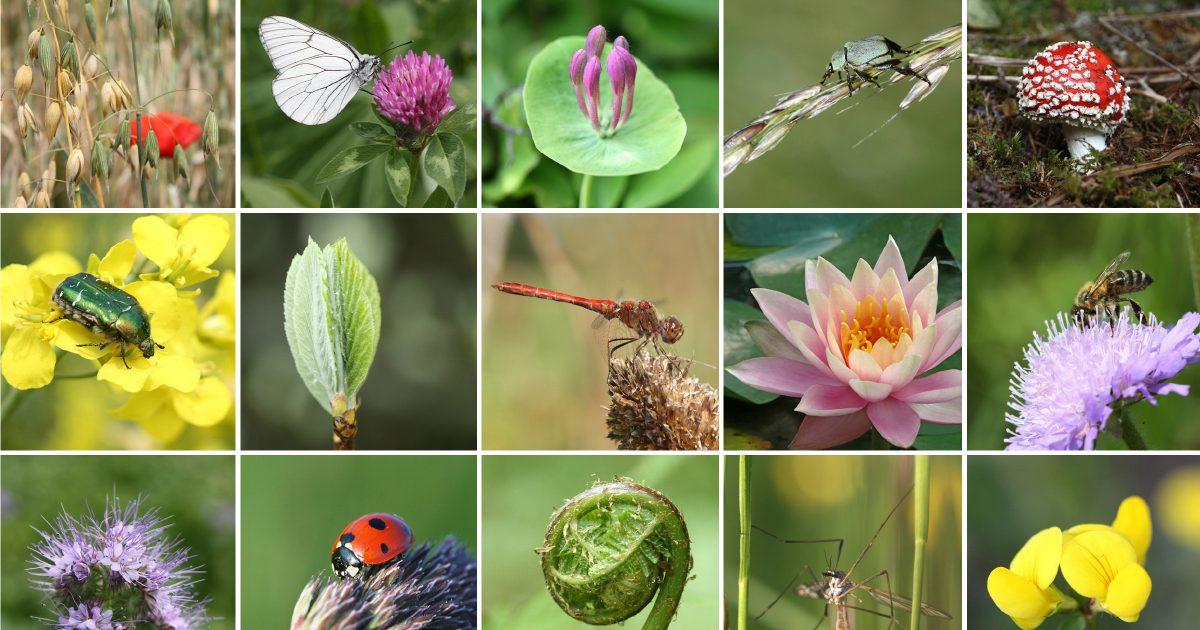 La biodiversité est essentielle pour réguler les ravageurs dans un jardin en permaculture
