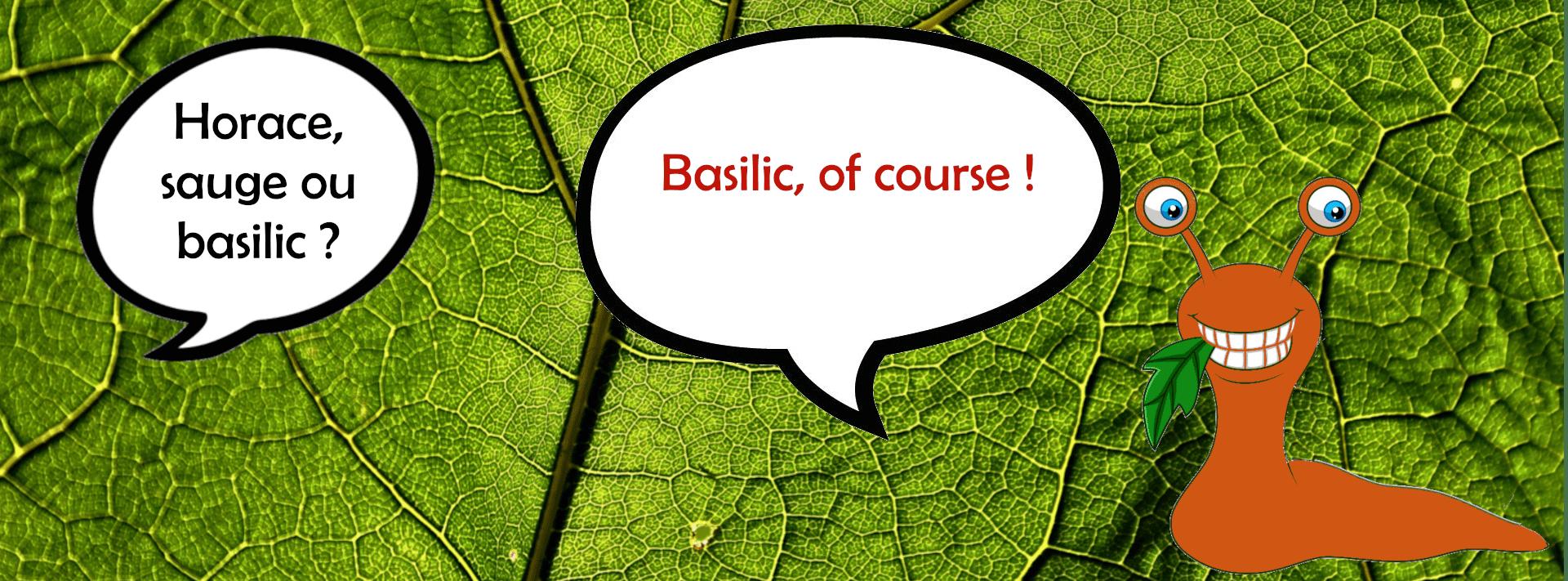Les limaces aiment le basilic