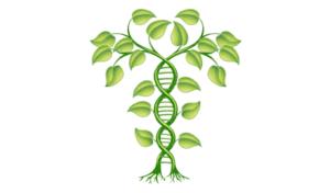 sélection des plantes resistantes aux limaces