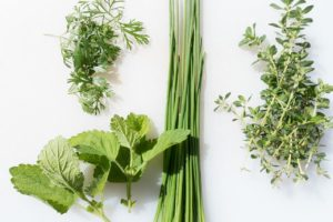 herbes aromatiques que les limace n'aiment pas manger