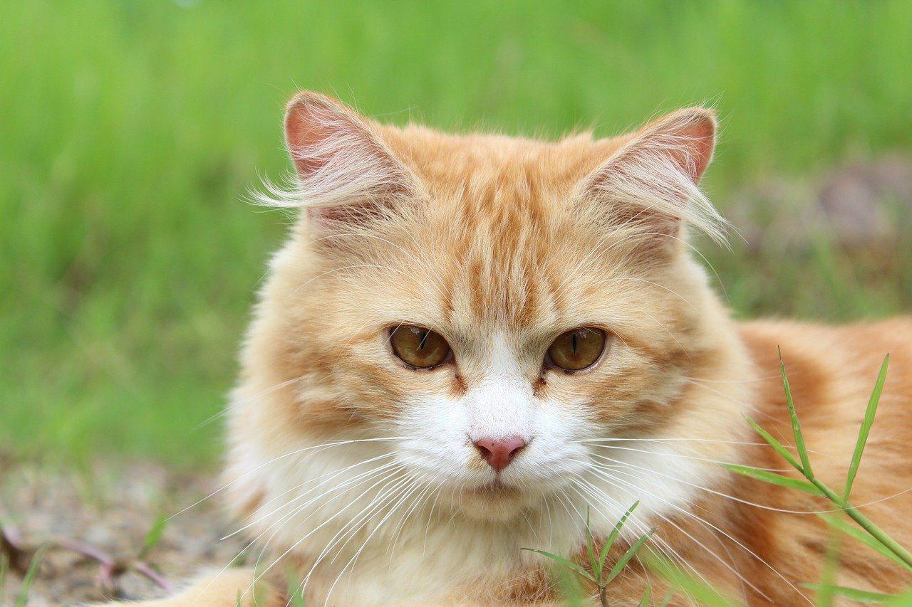 le chat est dangereux pour les grenouilles et les crapauds