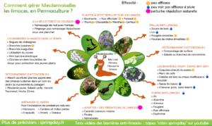 infographie sur le controle des limaces au potager