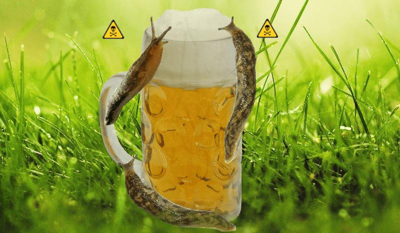 piège à bière contre les limaces