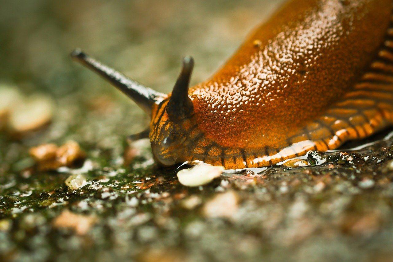Une limace