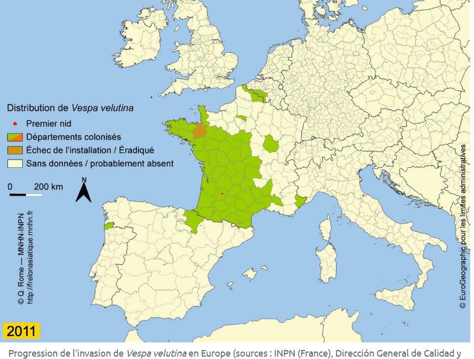 répartition frelons asiatiques en France en 2011