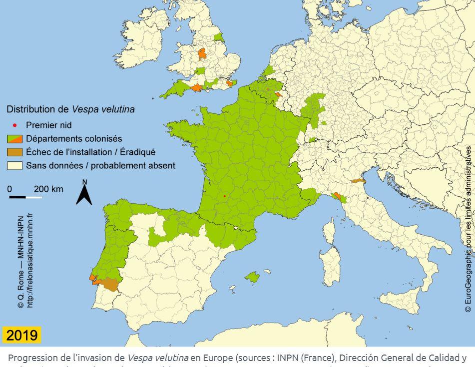 répartition frelons asiatiques en France en 2019