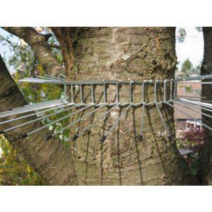 une barrière métallique pour empêcher les chats de monter aux arbres et tuer les oiseaux