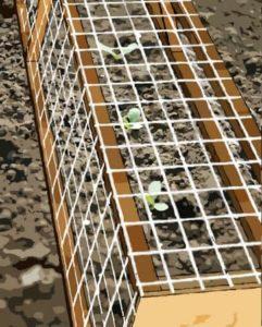 la cage à plante protege les semis des chats