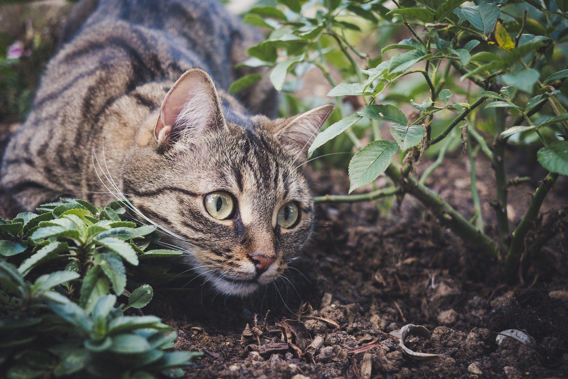 Les répulsifs pour chats au jardin : les remèdes de grand-mère