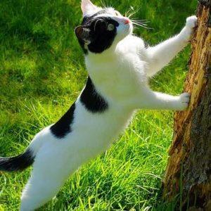 comment empêcher son chat de faire ses griffes sur un tronc d'arbre ?