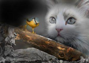 que faire si mon chat tue des oiseaux ?