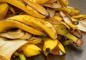 les peaux de bananes sont-elles un engrais permanent ?
