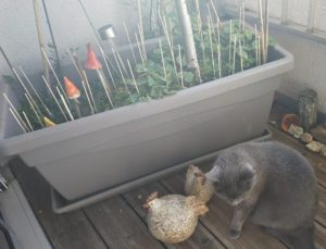 les pics à brochettes empêchent les chats de gratter la terre