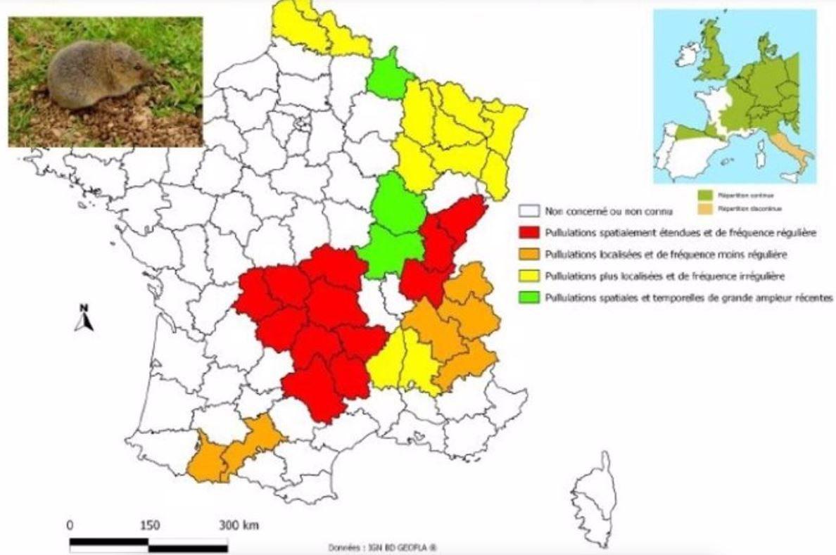 localisation des infestations de rats taupiers