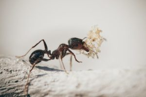 les fourmis sont utiles au jardin