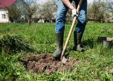 creuser un trou pour compter les larves de hanneton
