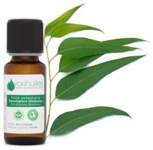 huile essentielle d'eucalyptuse anti larve de hanneton