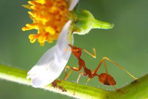 le marc de café contre les fourmis au jardin