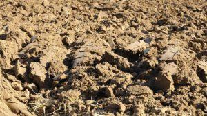 labourer le sol pour lutter contre les hannetons